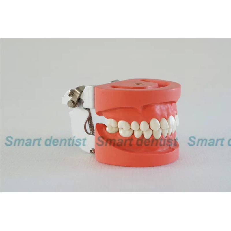 2016 Denture Dental Teaching Standard Model Dental Teeth Model 28 tooth with FE Articulator 2016 dental orthodontics typodont teeth model half metal half ceramic brace typodont with arch wire