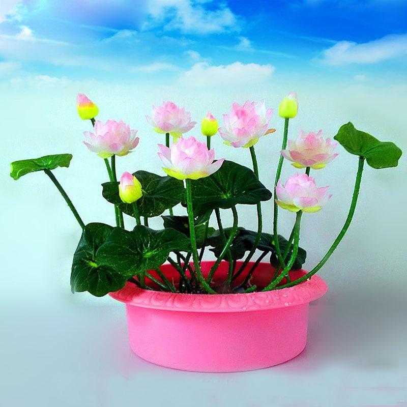 10 Pcs Pink white Bowl Lotus Seeds Balcony Patio Garden Potted Bonsai Plant Seeds Farm Nelumbo Nucifera Seed