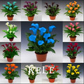 100Seeds/Bag calla seeds, Promotion! mixed color bonsai flower seeds home gardening,#9EIGD7