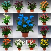 Buy  bonsai flower seeds home gardening,#9EIGD7  online