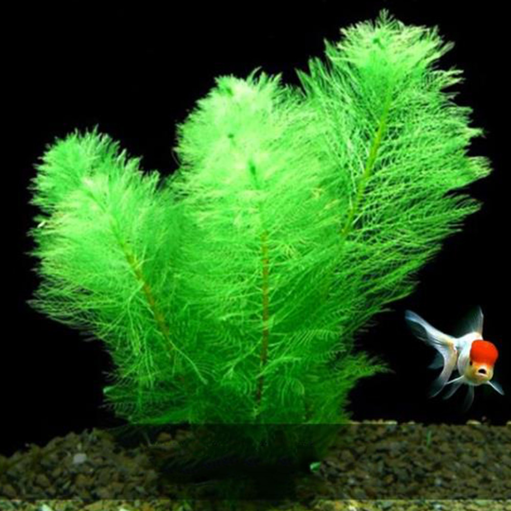 Aquarium Artificial Plant Decoration Green Grass Decoration Landscape Simulation Water Plant Landscape Accessories Decoration(China)