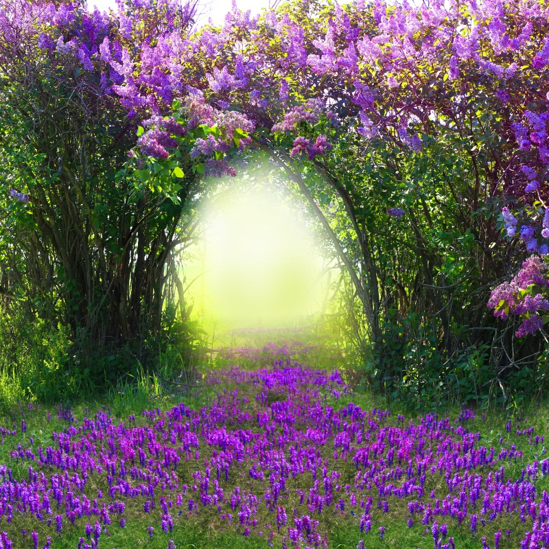 Laeacco Magic Spring Forest Purple Flowers Baby Photography Backgrounds For Photo Studio Vinyl Custom Camera Backdrops