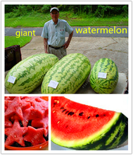 30 pcs/bag gaint watermelon seeds sweet healthy big watermelon organic food fruit seeds outdoor pot plant for home garden