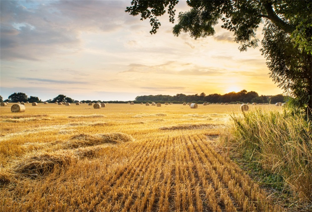 Laeacco Autumn Wheat Fields Hay Bale Portrait Scene Photographic Backdrops Customized Photography Backgrounds For Photo Studio