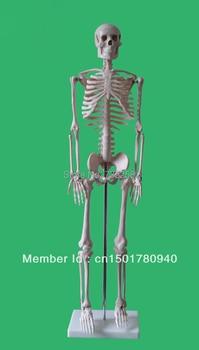 85 cm human body skeleton model