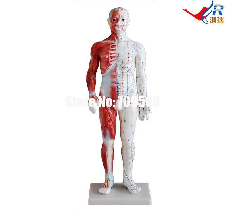 Akupunktur ve Kas Model 60 CM Erkek, akupunktur modeliAkupunktur ve Kas Model 60 CM Erkek, akupunktur modeli
