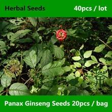 Chinese Term Renshen Panax Ginseng Seeds 40pcs, Origin Herbal Medicine Seeds, Perennial Plants With Fleshy Roots Ginseng Seeds