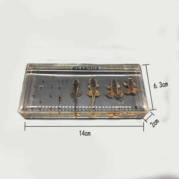 Life Cycle Of Frog Specimens In clear Lucite Educational Instrument