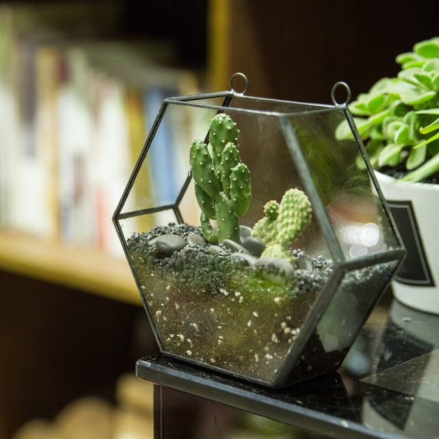 Wall geometric hexagon glass terrarium box succulent plant for Blumentopf glas