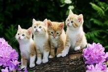 Living Room Home Modern Art Decor Canvas Fabric Poster Kittens Lovely Cute Little Animal Quartet DW108