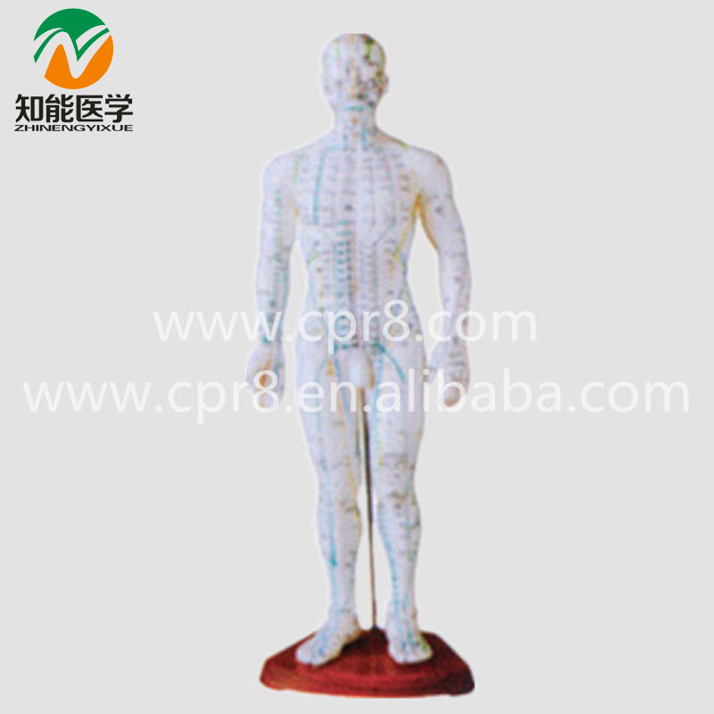 BIX-Y1007 Male Dody Acupuncture Model (50CM)  MQ204