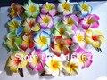 40 cor misturada Espuma flor Havaiana do Frangipani flower noivas cabelo clipe 4.5 cm