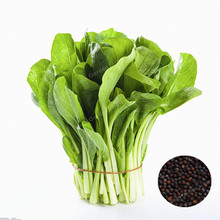 100 Pcs / Bag Pak Choi Chinese White Cabbage Vegetable Seeds Easy-Growing Heirloom Seeds Four Seasons Planting(China)