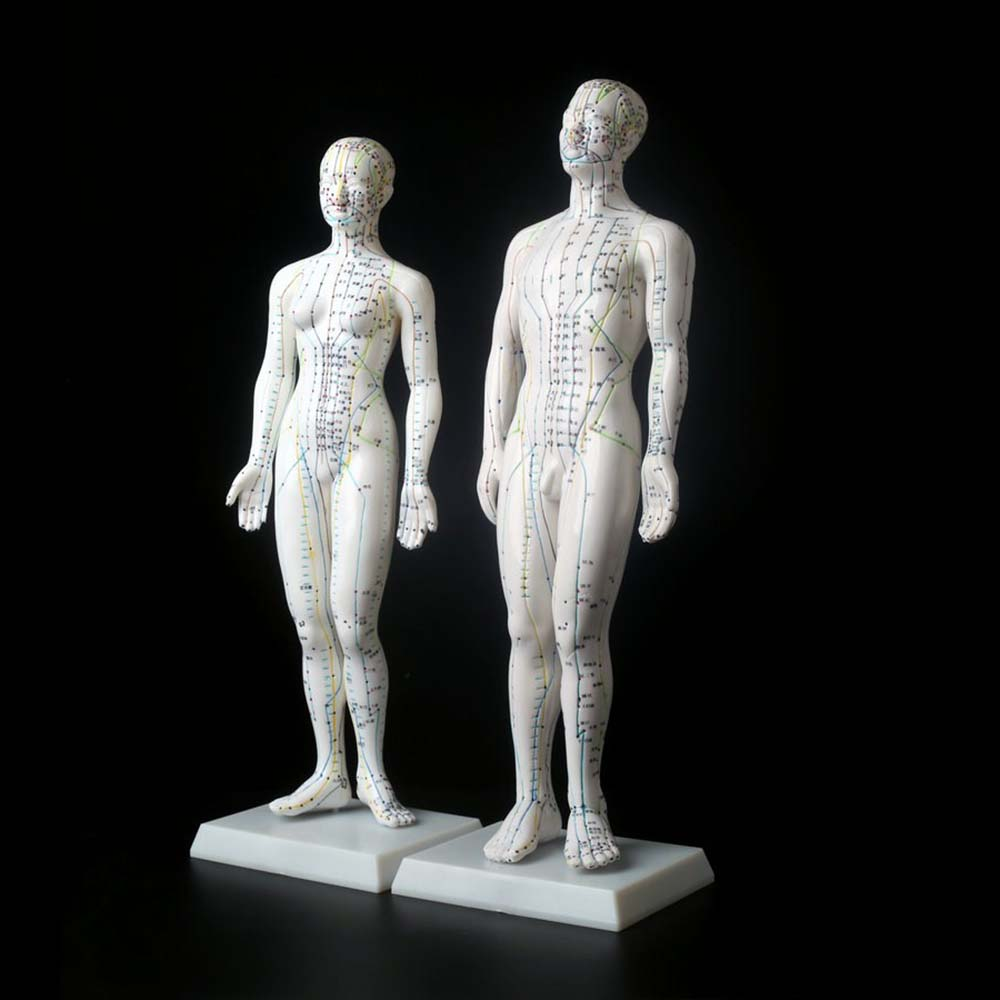 Meridian Model Human Acupuncture Meridian Points Model Male and Female Acupoint Model Medical Education Teaching Appliances hd soft silicagel acupuncture model 50cm male with base human acupuncture meridians model acupoint model acupuncture massage