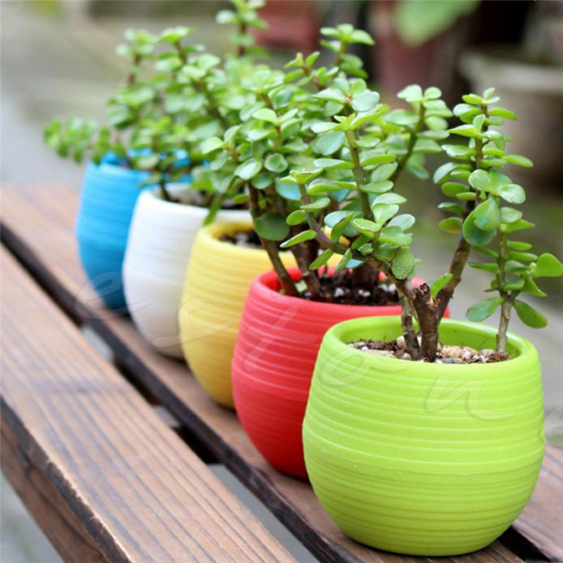 colourful mini flower pot for succulent plants round. Black Bedroom Furniture Sets. Home Design Ideas