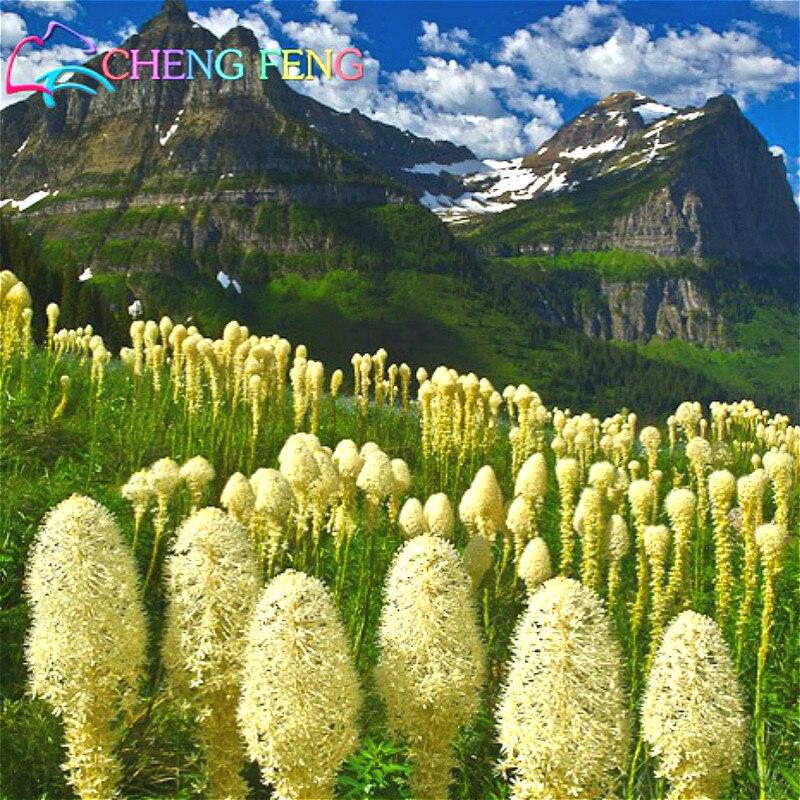 bear grass flower wwwpixsharkcom images galleries