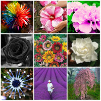 9 Kinds Of Flower Seeds DIY Home Garden Potted Or Yard Flower Seeds Plant Seeds Easy