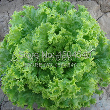 500 lettuce seeds, balcony seed sowing seasons household potted easy care,free shipping
