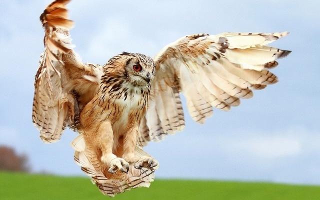 Sharp Owl Hunting Whit Open Wings Flying Diamond Painting Cross