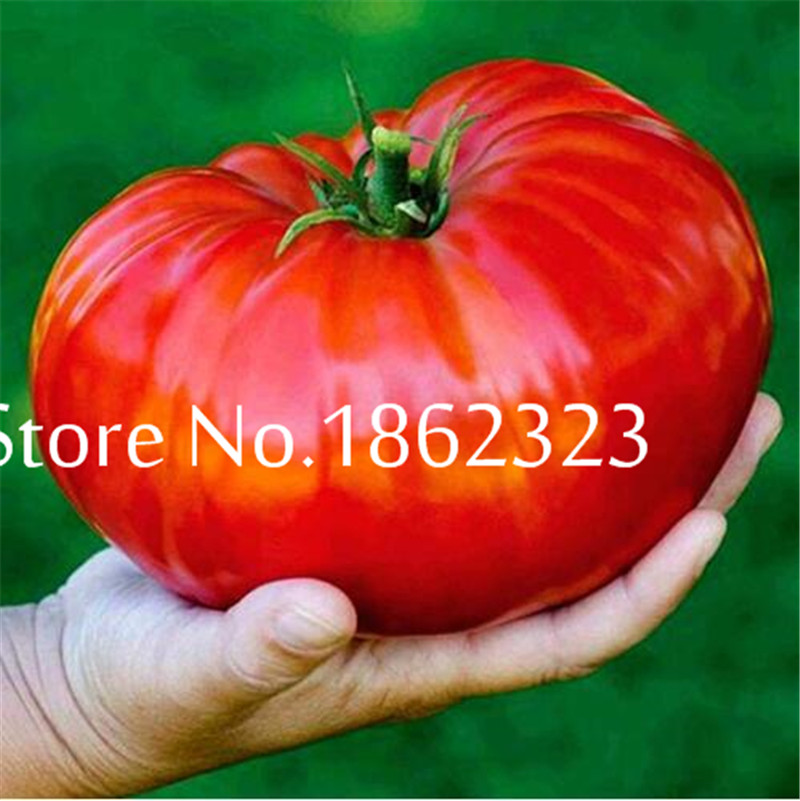Sweet Orange Tomato Bonsai Red Tomatoes Four Seasons Sowing Garden Balcony Potted Fruits And Vegetables Bonsai 200 Pcs