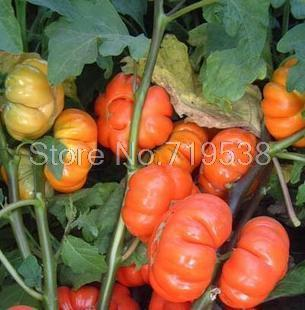Gold and silver eggplant seed varieties sightseeing garden potted ornamental varieties bagged 100 seeds