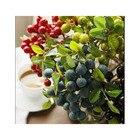 Decorative plant Blu...
