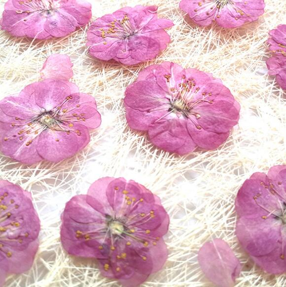 10pcs/lot romance Cherry blossom Pressed Dried Flower Preserved Flowers materials for Candle card crystal glue bookmark
