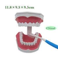 1 шт. стоматологическая, съемная модель зубов + образец зубной щетки со съемными нижними зубами 2,5 раз размер