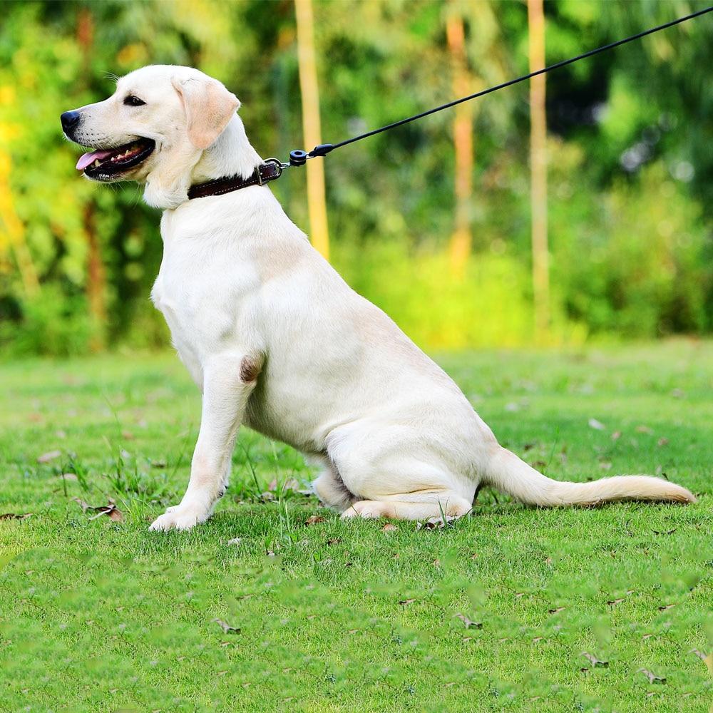 Image result for magnetic dog collar