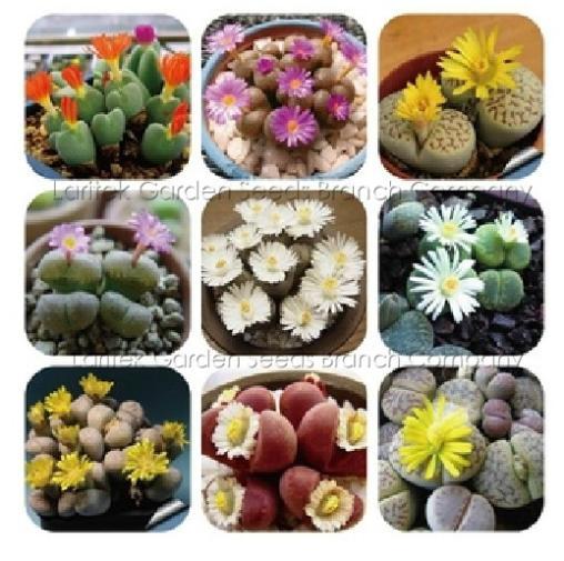 Popular Succulent Plant Types-Buy Cheap Succulent Plant Types Lots