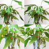 POP ITEM! 100Pcs Colorful Mini 3D Wall Stickers Home Decor Kid Toys DIY Ladybird Ladybug Christmas Gift 6LF8 6