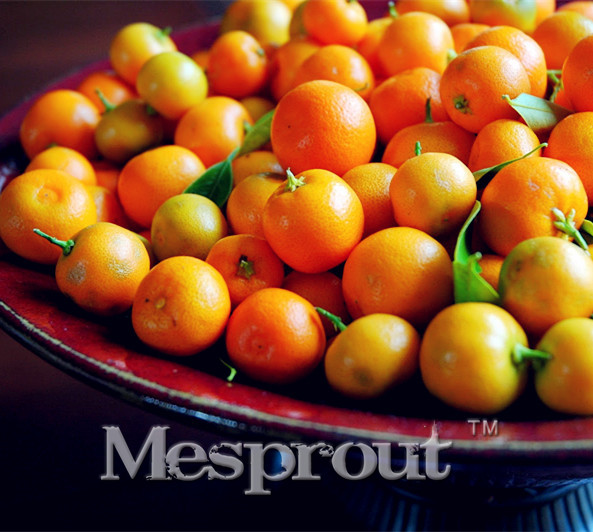 Cheap Seeds 30pcs Edible Oranges Fruit Mandarin Bonsai Tree Seeds Citrus Pots Plants Mini Garden Mandarin Orange Seeds Sementes
