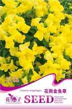 60 seeds Snapdragon flower bonsai seeds  flower pots planters seeds for garden bonsai