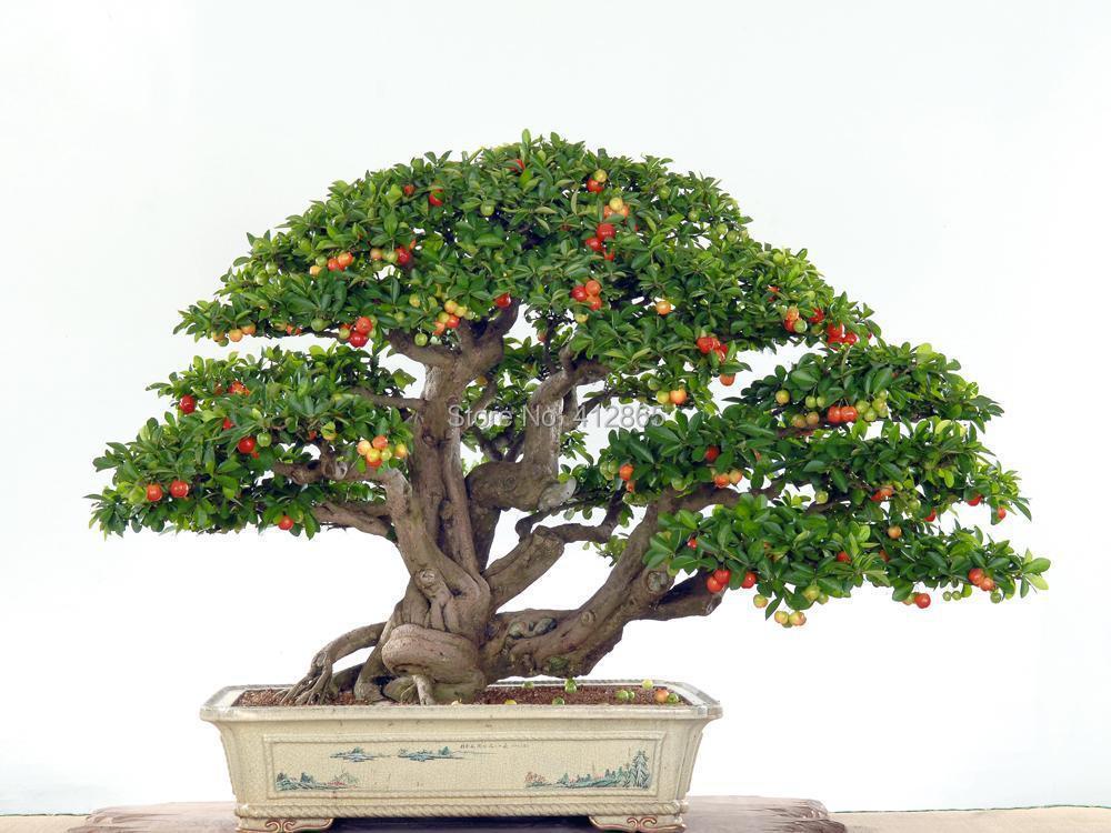 Upscale Indoor Plants, Need...