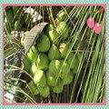 250g de grau Superior pó de coco ralado, pó de Coco seco com preço razoável