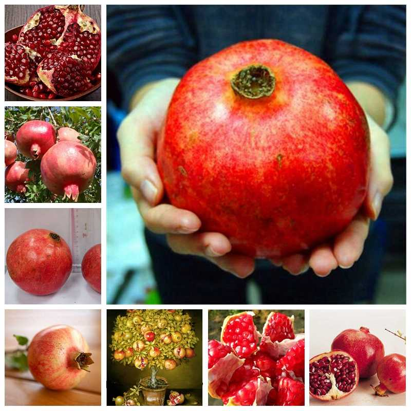 10 pcs Garden Mini Bonsai Pomegranate Plant Very Sweet Delicious Fruit Planta Perennial Succulents Tree Potted Plante Easy Grow