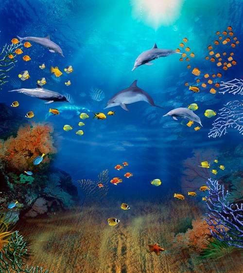 8x8FT Under Sea Dolphins Coral Reef Sunshine Fish Aquarium