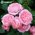 Роуз семена, вьющихся Растений, Polyantha выросли, китайский Семена Цветов, вьющихся Роз Семена, 100 шт./пакет (Смешанный цвет)