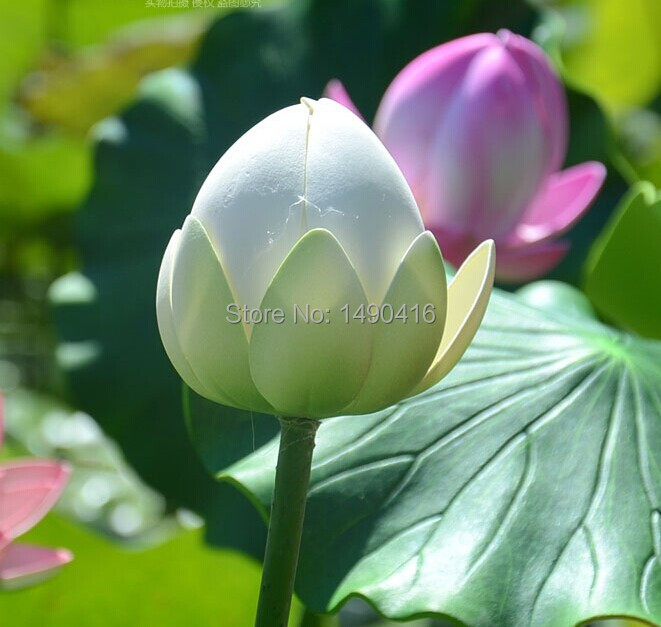 5pcs  Artificial Lotus bud with stem Water Lily For DIY Garden Pool Decoration dance props