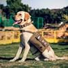 OneTigris Nylon Dog Pack Hound Hiking Saddle Bag Rucksack Dog Backpack For Medium Large Dog Travel