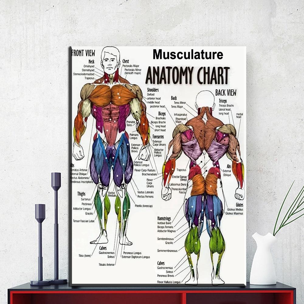NICOLESHENTING Human Anatomy Muscles System Art Silk Poster 13x20 ...
