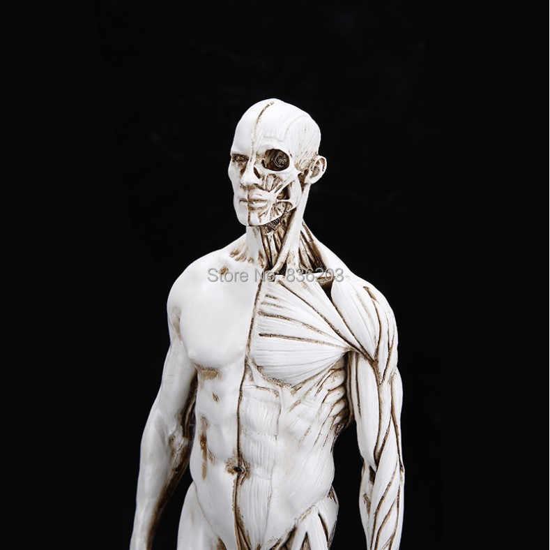 1 6 Beyaz Erkek Insan Tibbi Iskelet Anatomik Boyama Modeli