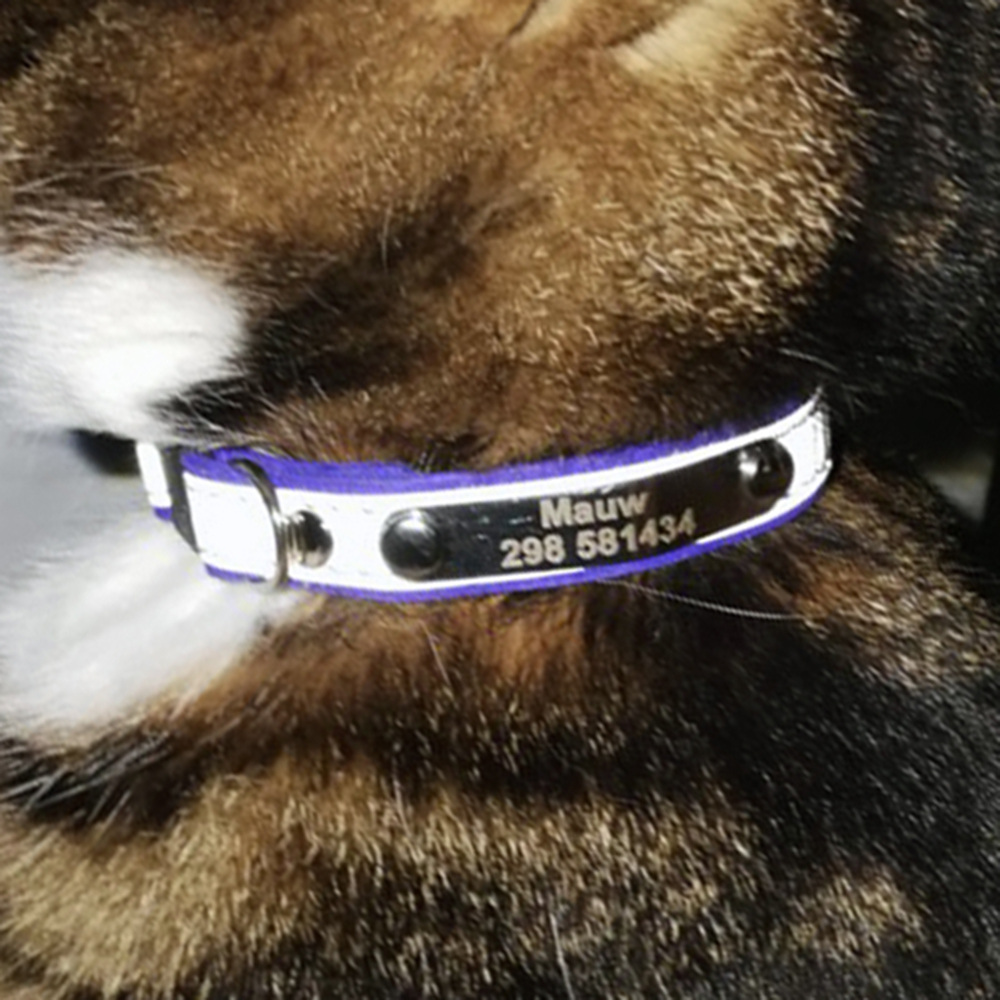best top 10 custom collar ideas and get free shipping - 5jh2aj8h