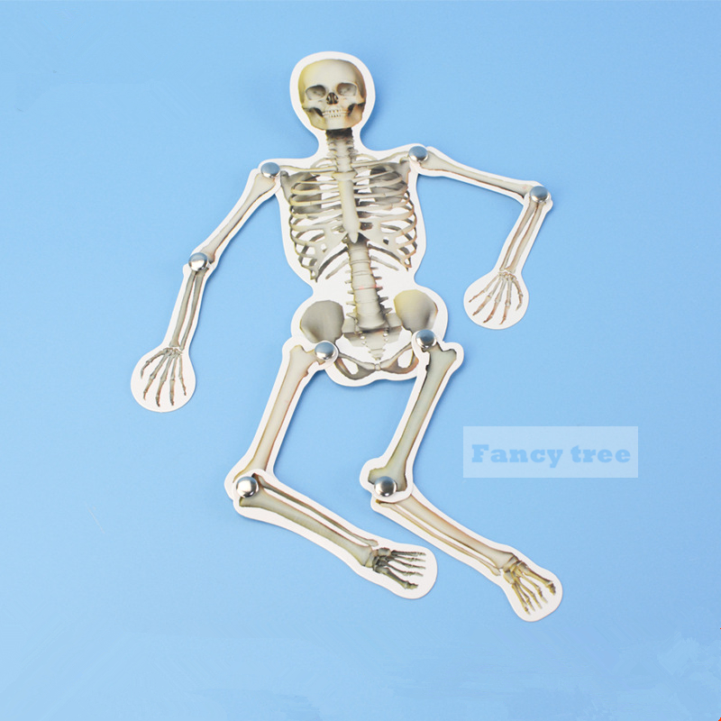 DIY Human Body Bones Model Movable Paper Joints Building Kits Jigsaw Puzzle Teaching Tools Dancing Bones For Child Education