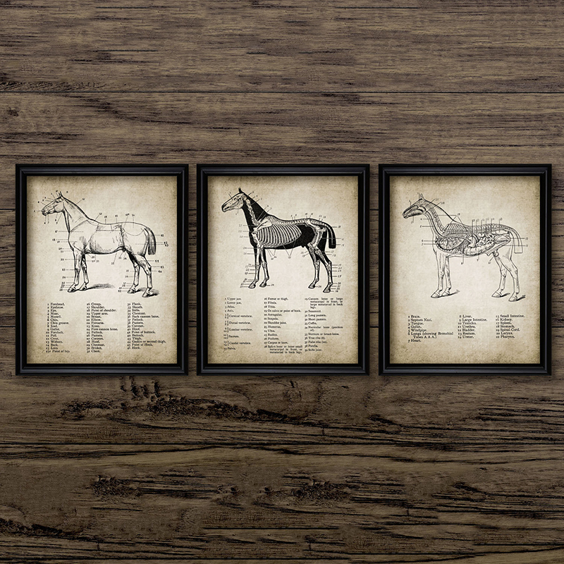 Us 2 66 20 Off Vintage Horse Anatomy Canvas Posters Print Ilration Wall Art Painting Equestrian Pictures Home Room Decor In