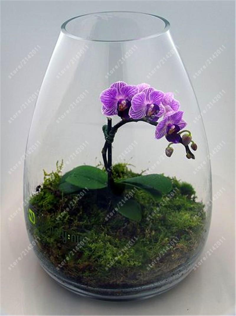 горшки для орхидей доставка из Китая