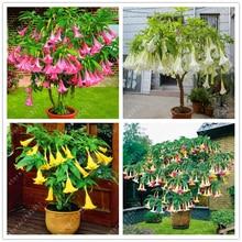 100 pcs/bag brugmansia datura seeds, dwarf Angel Trumpets bonsai flower seeds,rare potted plant for home garden