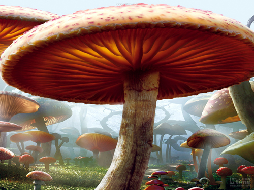 Horizontal Art fabric Party photography backdrops fairy tale mushroom photo background for portrait XT-3850 bkt tf8181 11 16 8pr tt
