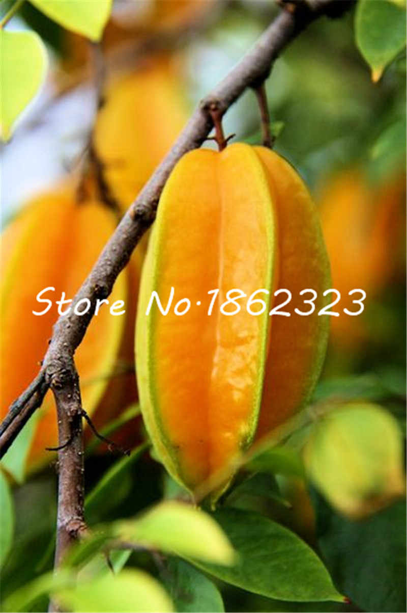 100 pcs Importato Carambola Bonsai Star Albero da Frutto Arbusto Frutta Biologica Commestibile Star di frutta per la Casa Giardino Vaso di Fiori Fioriere