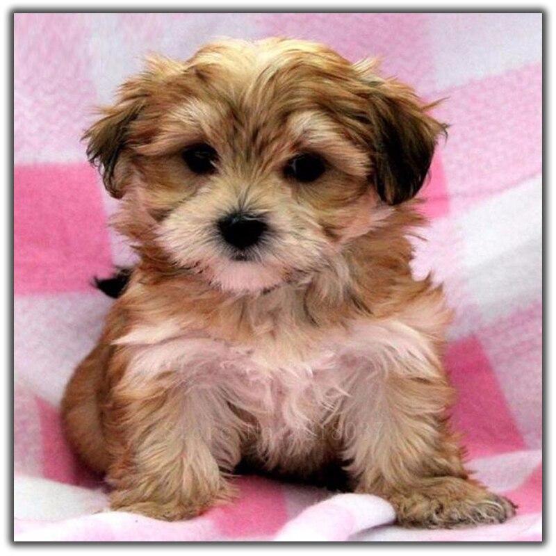 100% Kwaliteit Diy Diamant Schilderen Kruissteek Baby Hond Zitten Op Het Bed Handwerken Diamant Borduurwerk Volledige Ronde Mozaïek Decoratie Hars
